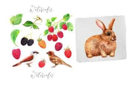 Watercolor Raspberry Graphics Clipart